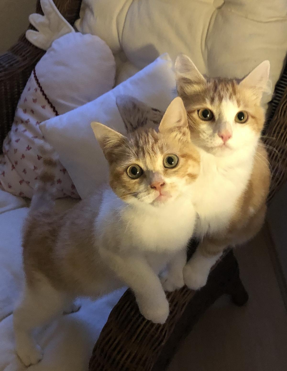 Miel & Menta