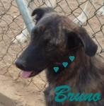 Bruno00 - Kopie