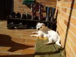 Nach einer Fahrradtour genießt die kleine Maus die Entspannung in der Sonne