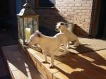 Caty mit eine ihrer Freundinnen aus dem großen Terrier-Rudel