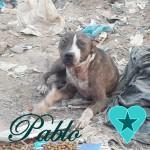Pablo00 - Kopie