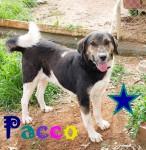 Pacco000 - Kopie