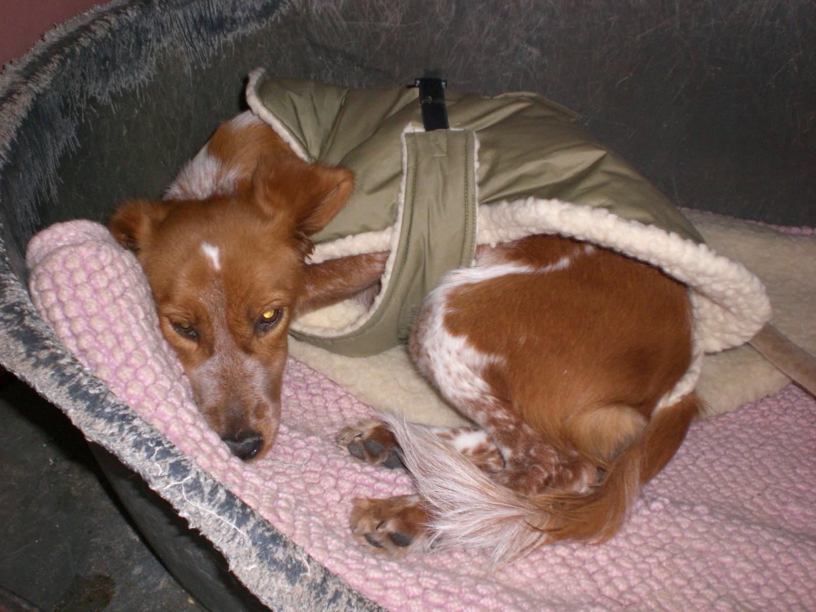Tierhilfe spanien e v hilfe für herrenlose spanische hunde und