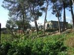 SOS-Animal Mallorca